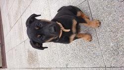 Laika, chien