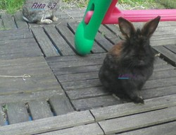 Laila, rongeur Lapin