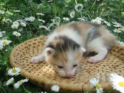 Laly, chat Gouttière