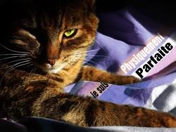 Lamounette, chat Gouttière
