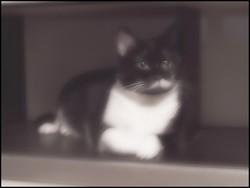 Lana - Devenue, Ange Au Paradis, chat Gouttière