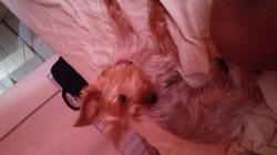 Lana, chien