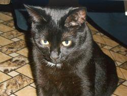 Lanah, chat Gouttière