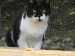Lapin, chat Gouttière