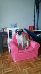 Lara, chien Carlin