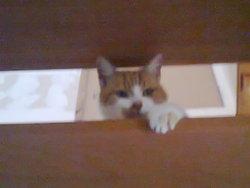 Larousse, chat Gouttière