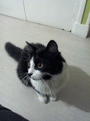 Laska, chat