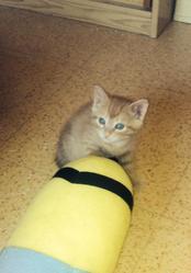 Lasso, chat Gouttière