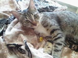Laura, chat Gouttière