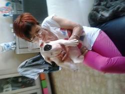 Layka, chien Bull Terrier