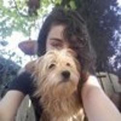 Layka, chien Yorkshire Terrier