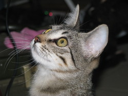 Lazulli, chat