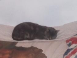Le Chat, chat Gouttière