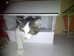 Le Chat Ou Bb, chat