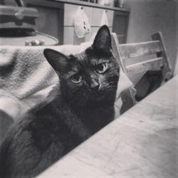 Le P'Ti Chat, chat Gouttière