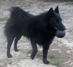 Le Petit Prince, chien