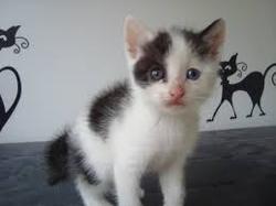 Léa, chat Gouttière