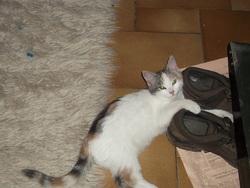Léa, chat