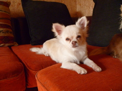 Léa De Celaya, chien