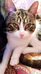 Lecky, chat Gouttière