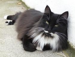 Leeloo, chat Gouttière