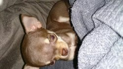 Leelou, chien