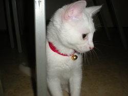 Leia, chat Gouttière