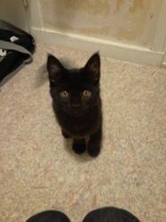 Léia, chat Gouttière
