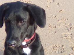 Leiko, chien