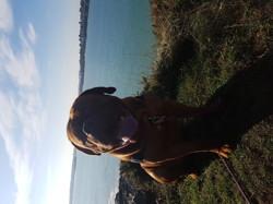 Leiko, chien Dogue de Bordeaux