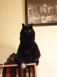 La Miss, chat Gouttière