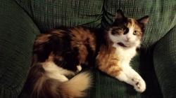 Lela, chat