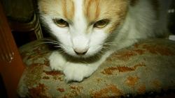 Léna, chat
