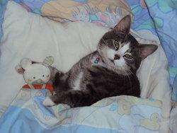 Léo, chat Gouttière