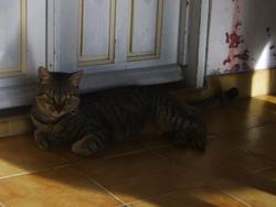 Leo, chat Gouttière