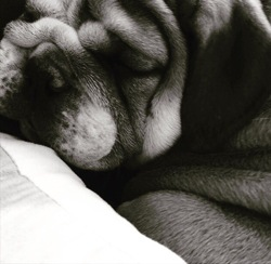 Léo, chien