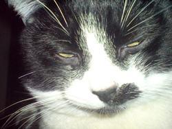 Léon, chat Gouttière