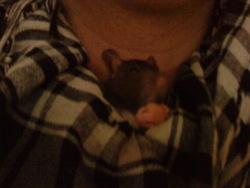 Léon, rongeur Rat