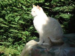 Léon, chat