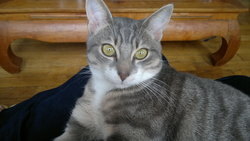Leonard, chat Gouttière