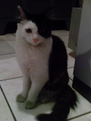Léonard, chat