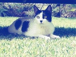 Léonardo, chat Gouttière