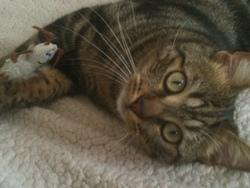 Léonidas, chat Gouttière