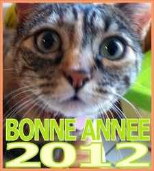 Léonie, chat Européen