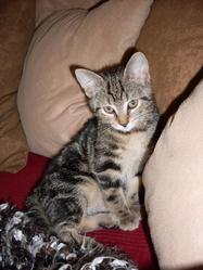 Leonie, chat
