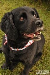 Léopold, chien