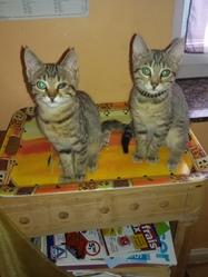 Les Bébés, chat