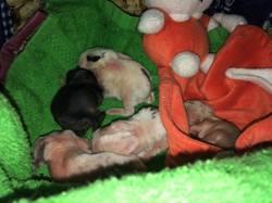 Les Bébés De Prunelle, rongeur Lapin