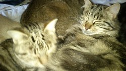 Les Jumeaux , chat
