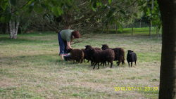 Les Moutonnes, autres